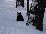 И глаза кота, как угли, зашипели на снегу... (из цикла