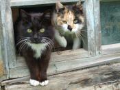 Кошки в окне