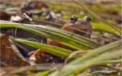 Взгляд из травы