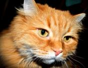 задумчивый кот...