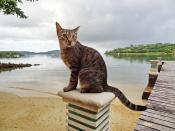 Заморский кот