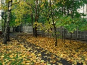 Осенний городской сюжет