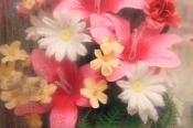 Цветы,которые не вянут