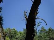 Деревянная птица