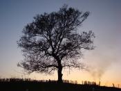Волшебное древо