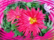 цвет осени