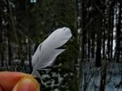 Останки голубя мира