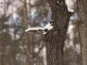 Клюв хищной птицы