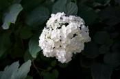 Белое на Зеленом