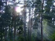 дым в лесу