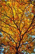 Осенний витраж