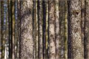 Пазл леса