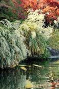 Японский парк
