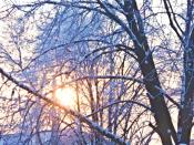 Зимнее урто