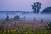 Туманное утро 2