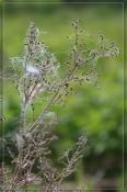 Былинки-травинки