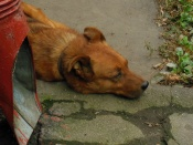 Безделье (dog's life is never work)