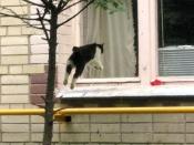 Кошка-летяга