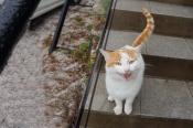 Кот - привратник