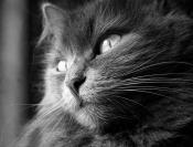 Буся-все кошки серы