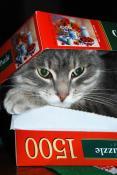 Кот, пазлы, любовь...