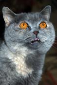 Кошка - дьяволица ...