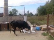 Пейте люди молоко будите здоровы 2!!!)))