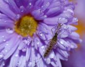 Интересный комарик