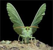 Королева в зелёной шубке