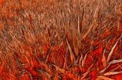 Огненная трава