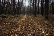 Солнечные дорожки на осенней листве