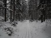 Рождественская лыжня