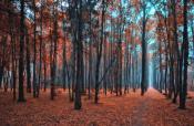 Усталый лес